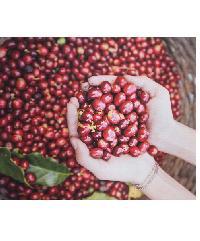 NICE รูปภาพพิมพ์ผ้าใบ Coffee Shop ขนาด 40x50ซม. (ก.xส.) ( เมล็ดกาแฟ) C4050-1