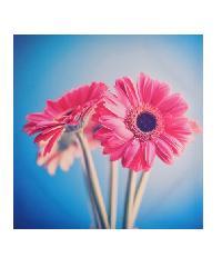 NICE รูปภาพพิมพ์ผ้าใบ 40x40ซม. (ก.xส.)(รูปดอกทานตะวันสีชมพู) Kid C4040-3