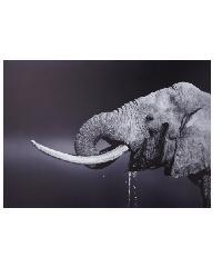 NICE รูปภาพพิมพ์ผ้าใบ 70x50 ซม. (ก.xส.) (รูปช้าง) Animals C7050-5