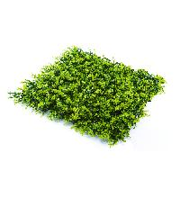 Tree O ต้นไม้เทียมติดผนัง  ขนาด 50×50×3 ซม.  MZ188003A  สีเขียว