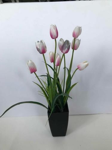 - ดอกทิวลิปเทียม สีชมพู-ขาว XJLRD-19-2